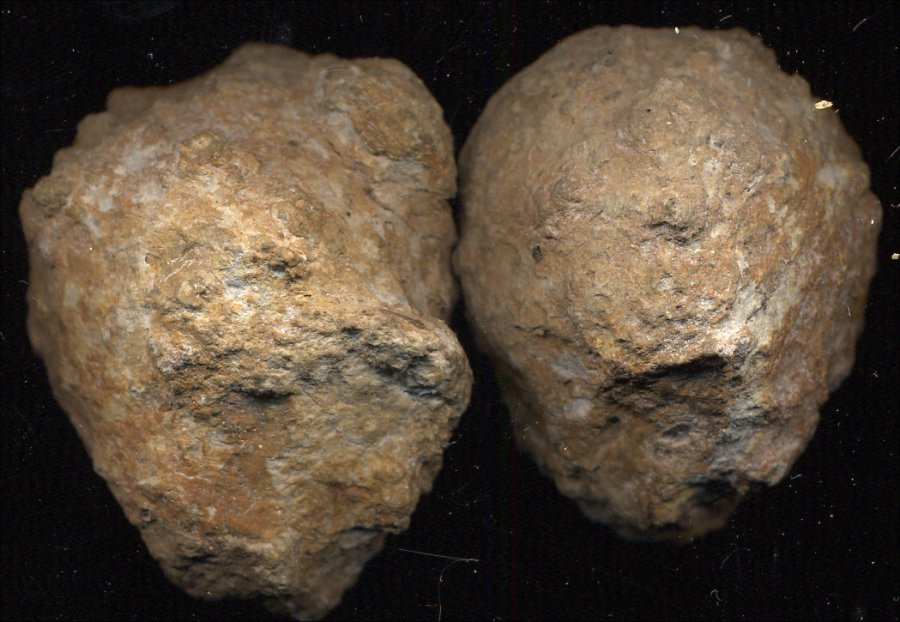 Dwarves Earth Treasures Mexican Coconuts From Mestano
