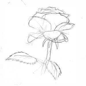 how to draw rose leaves
